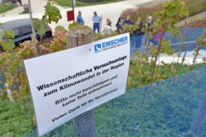 Weinlese Phönix-See