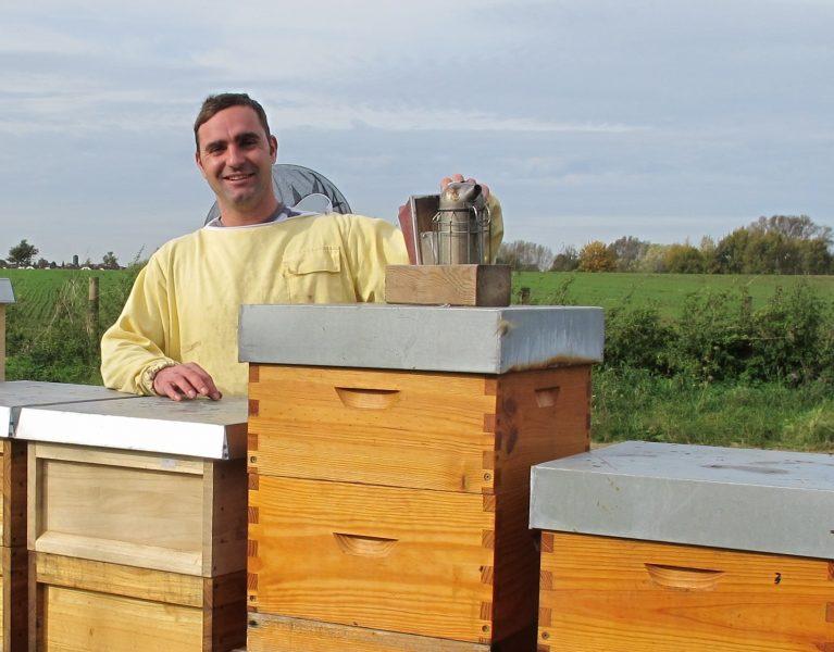 Bienen gehören zur Neuen Seseke