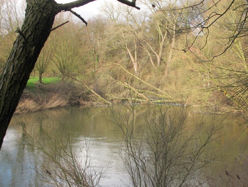 Großer Baum stürzt in die Lippe – Fluss bei Ahsen voll gesperrt