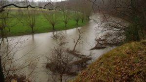 Der hohe Wasserstand der Lippe hat den Baum im Wasser gedreht.