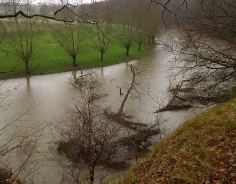 Hochwasser legt Baum in der Lippe auf die Seite