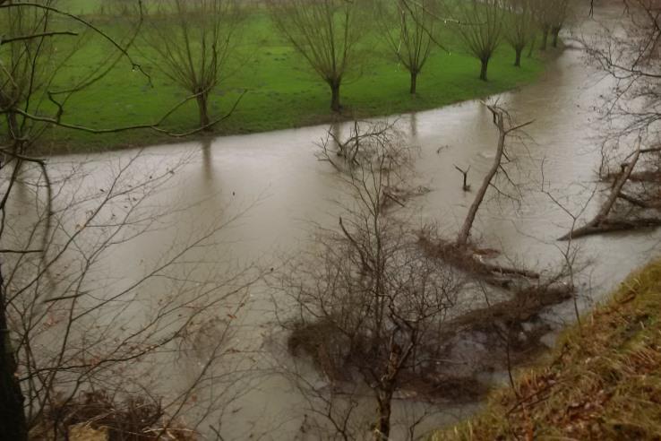 Toter Baum – lebendiger Fluss