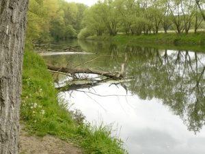 """Die Lippe bei Olfen - hier wurden Bäume gezielt als """"Totholz"""" ins Gewässer eingebracht."""