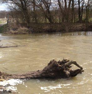 Totholz im Fluss ist ein Lebensraum für viele Arten.