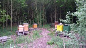 Auch die Bienen eines örtlichen Imkers leben am HRB. Foto: Katrin Schnelle