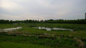 Die Seseke-Auen rund um das Hochwasserrückhaltebecken in Bönen bieten zahlreichen Tier- und Pflanzenarten ein Zuhause. Foto: Katrin Schnelle
