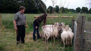 Schließlich siegt der Fresstrieb - die Herde ist eingefangen! Foto: Katrin Schnelle