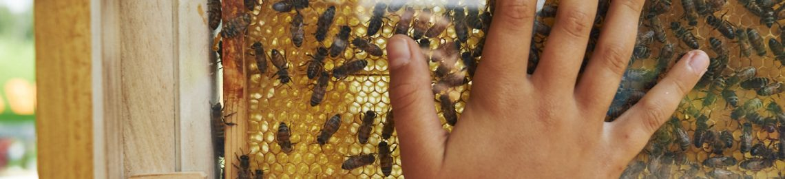 Bienenfest