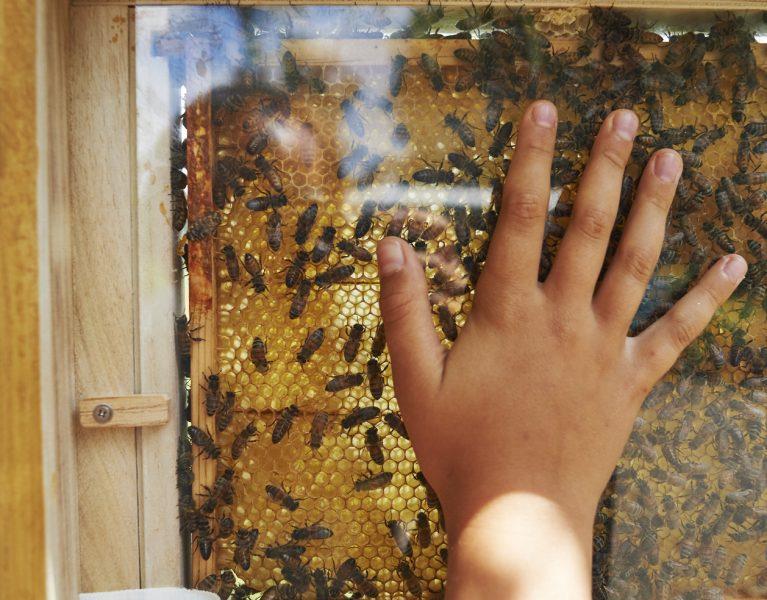 Tiere an Emscher und Lippe – Teil 3: Im (Emscher-)Tal der Königin: Bienenfest in Holzwickede