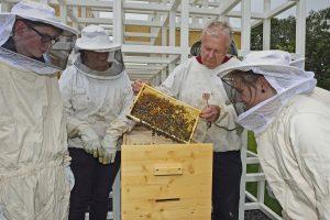 Kleine Tierchen, großer Staat - Wie siedelt man eine Bienengesellschaft an? Foto: Ralph Lueger
