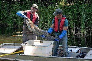 Zwar kein Pottwal - aber trotzdem ein dicker Fisch...:-) Fang in der Alten Emscher! Foto: EG