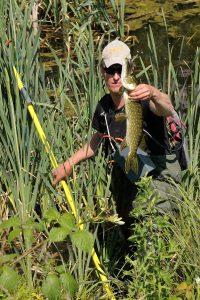 Und ich habe mich doch nicht getäuscht: Es gibt wieder Fische in der Alten Emscher! Foto: EG