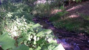 Noch bestimmen Brennnesseln, Kletten und Gräser das bereits leicht verschattete Ufer.