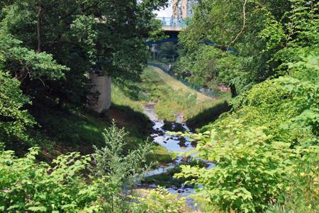 Grüne Idylle: der Borbecker Mühlenbach in Essen. Foto:Ilias Abawi