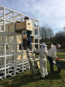 """Die Bienen werden """"eingeschlagen"""" durch Imkerin Rita Breker-Kremer (auf der Leiter) und Siggi Rinke (an der Schubkarre). Unsere FSJ-Kultur Charlotte Priebe hilft ... (Foto: Patricia Bender)"""