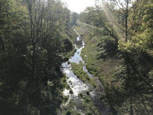 Unser Vorzeigeprojekt: die Aue des Borbecker Mühlenbachs in Essen-Holsterhausen. Foto: Ilias Abawi