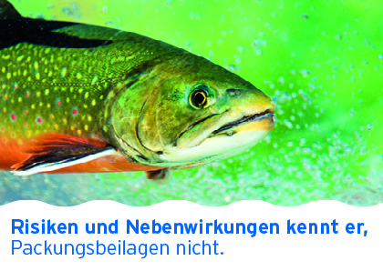 Postkartenmotiv mit plakativem Fisch