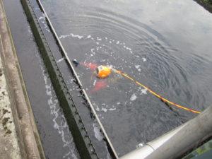 Es geht abwärts! Tief unten im gereinigten Abwasser macht sich der Taucher an die Arbeit. Foto: Aleksander Preuß