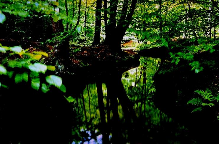 Licht in der Nacht: Rotbach neu entdecken