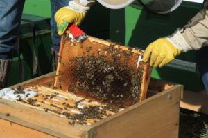Leben jetzt in Holzbeuten: Die Bienen am Emscherquellhof.