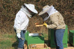 Das blattlose Brombeergestrüpp im Hintergrund wird sich in den kommenden Wochen zu einem blühenden Tummelplatz für die Bienen entwickeln.