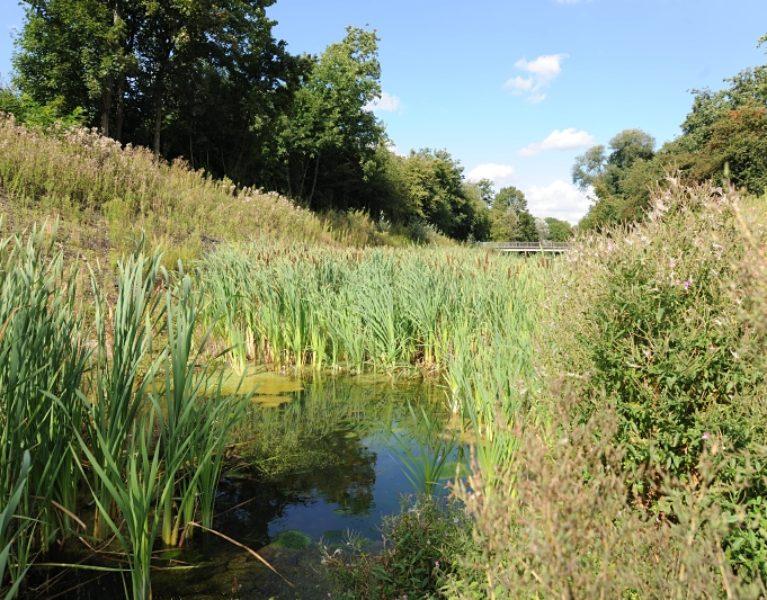 Auf den Spuren des renaturierten Hahnenbachs