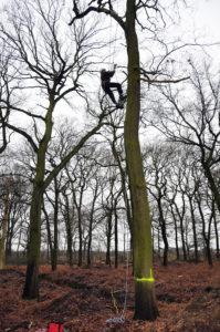 Mit einem Lehrgang zum Baumpfleger rundete Matthias Hower sein Studium zum Landschaftspfleger ab: Das ein oder andere Mal geht es für ihn hoch hinaus bis in die Baumkrone. Foto: Michael Wulf/EGLV