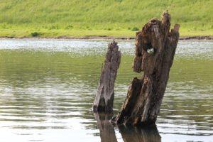 Durch die Linse entdeckt der Hobbyfotograf das Lippeland immer wieder neu. Foto: Peter zur Mühlen/EGLV
