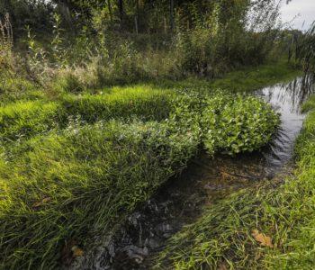 Mündungsbereich Breuskes Mühlenbach: Hier hat sich der Hellbach schon jetzt zu einem naturnahen Fluss entwickelt. Foto: Rupert Oberhäuser/EGLV