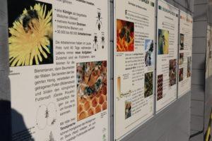 Ökologische Vielfalt liegt uns am Herzen. Zukünftig werden wir noch enger mit dem NABU zusammenarbeiten. Foto: Celina Winter / EGLV