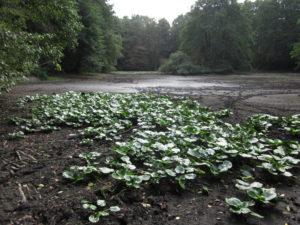 Das Hochwasserrückhaltebecken Weierbach in Marl ist im letzten Sommer komplett ausgetrocknet. Foto: Dr. Alexander Hartung/EGLV