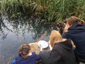 Kita- und Grundschulkinder untersuchen die Tierwelt im Hahnenbach. Foto: Agnes Sawer/EGLV